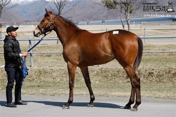【NMB48】母馬「ミユキ」の牝馬「サヤネエ」が藤田「なな」子騎乗で間もなくデビューw
