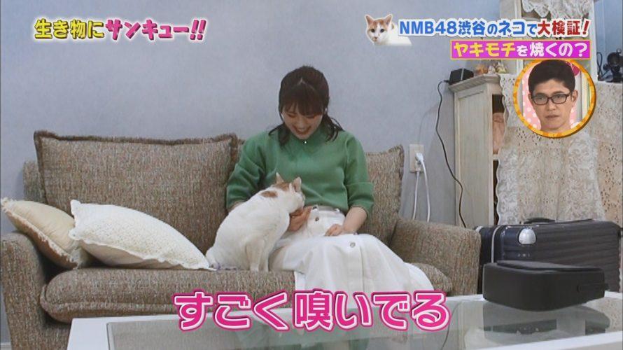 【渋谷凪咲】なぎさ出演「トコトン掘り下げ隊!生き物にサンキュー!!」ネコは飼い主が浮気したら焼きもちを焼く?