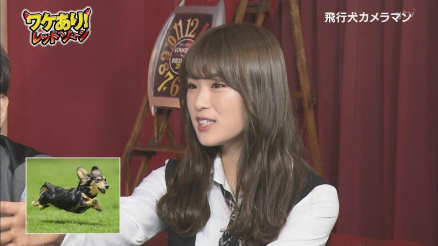 【渋谷凪咲】なぎさ出演・ワケあり!レッドゾーンキャプ画像。犬めっちゃ可愛いw