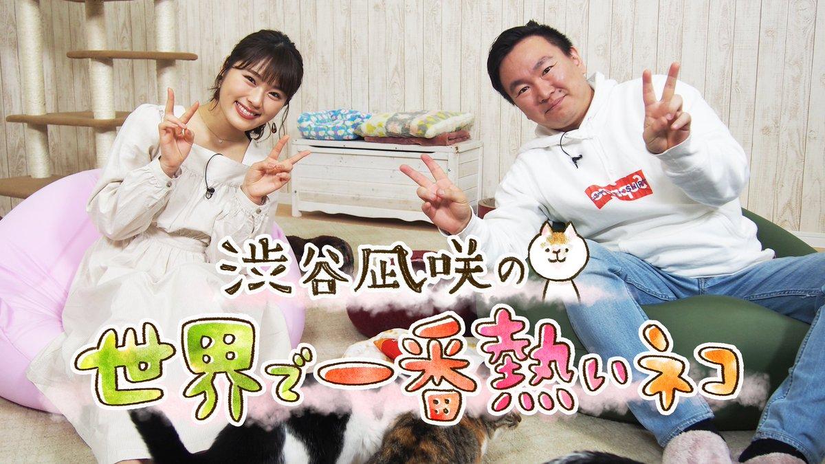 【NMB48】大阪チャンネルで「渋谷凪咲の世界で一番熱いネコ」が配信。かまいたち・山内さんとミキ・亜生さんが登場