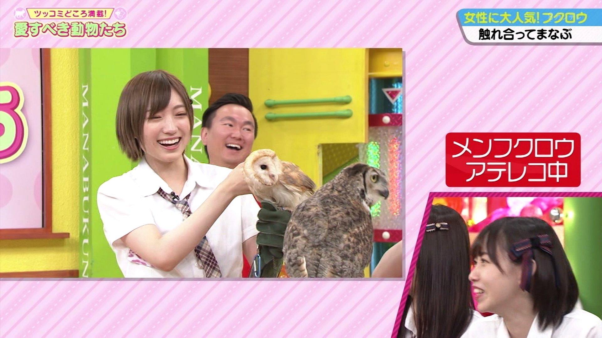 【NMB48】8月2日放送「NMBとまなぶくん」♯319の画像。アンタッチャブル柴田さんの動物授業