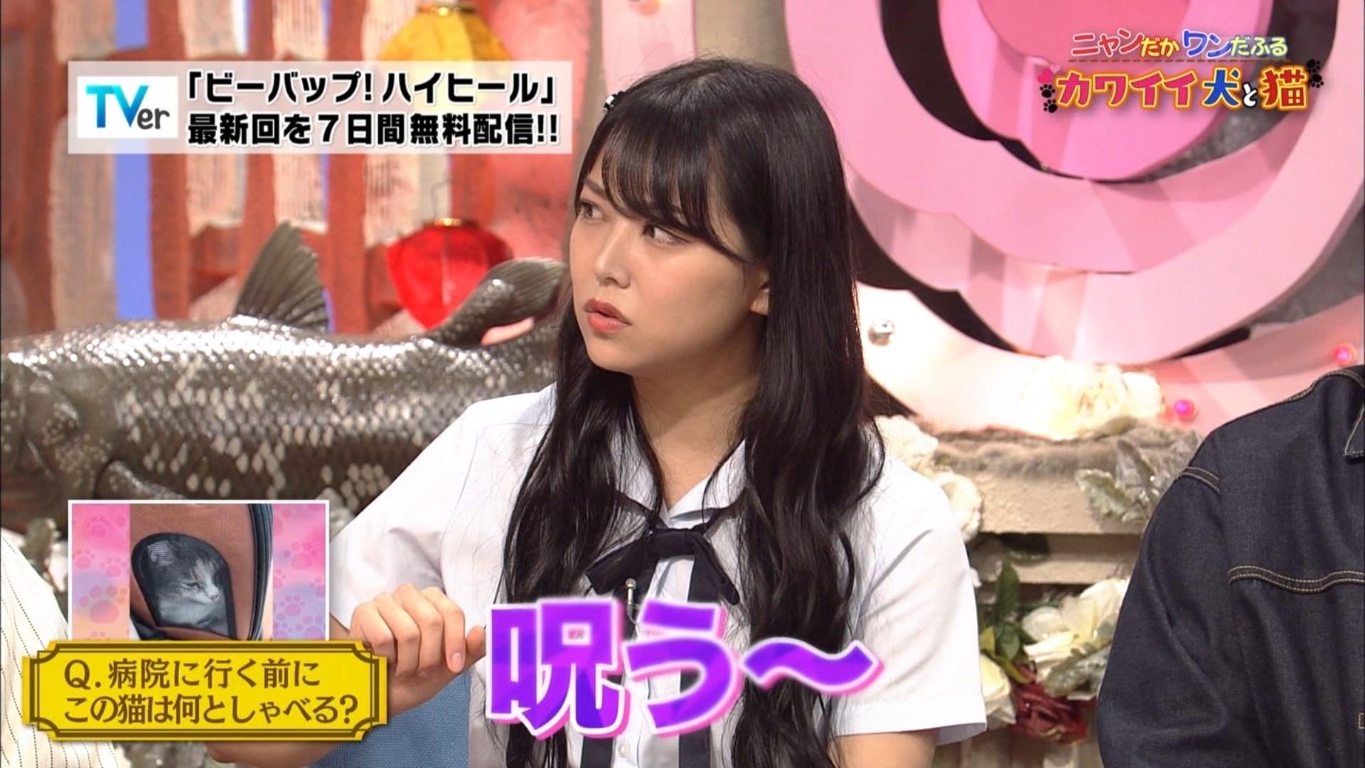 【白間美瑠】みるるんが出演した10月3日放送「ビーバップ!ハイヒール・ニャンだかワンだふる!カワイイ犬と猫」の画像