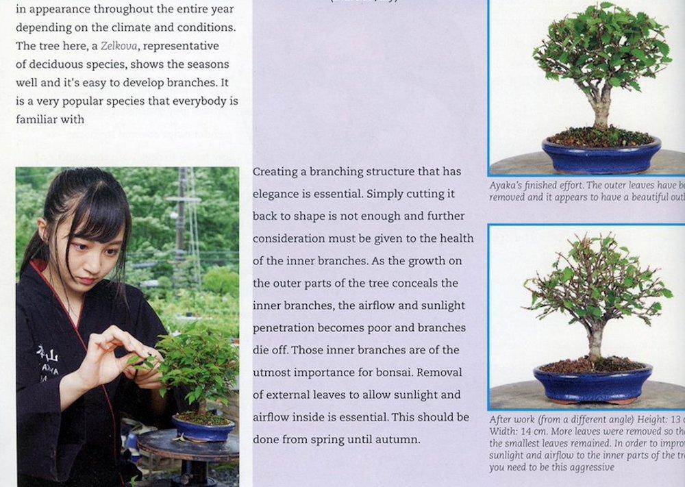 【山本彩加】近代盆栽さんのあーやんの記事がオランダ「bonsai Focus」に掲載「Ayaka Yamamoto, a famous popstar in Japan」
