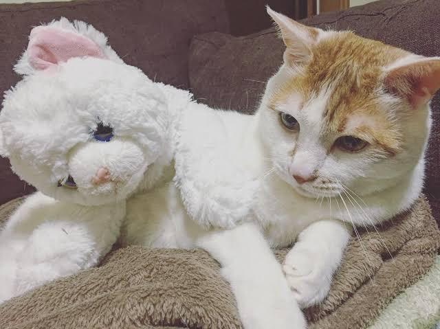 【渋谷凪咲】なぎさの愛猫・メイさんが天国へ。